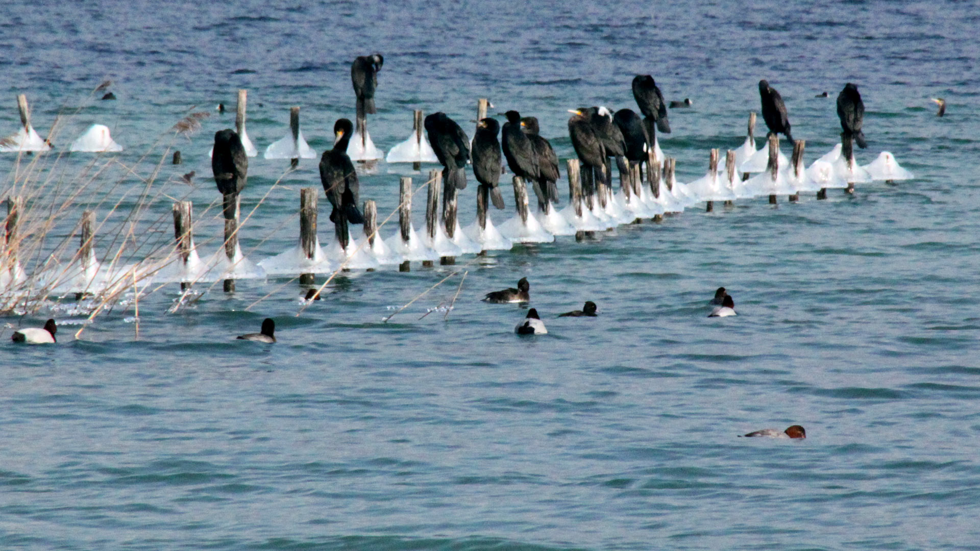 Avec -10°C sur le lac d'Annecy en février 2012, stand-by pour le stand-up…
