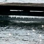 Gouttelettes de glaces sous un ponton / Lac d'Annecy